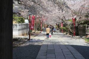 法華経寺のお花見