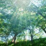 「世界のエリートがやっている最高の休息法」(久賀谷亮著)を読んで呼吸法を実践