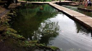 ありのみコースの池