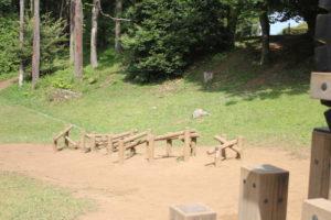 昭和の森のアスレチックのランダムステップ