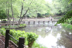 大町自然観察園の池